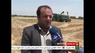 Iran Eslam-Shahr county, Wheat Harvest برداشت گندم شهرستان اسلامشهر ايران