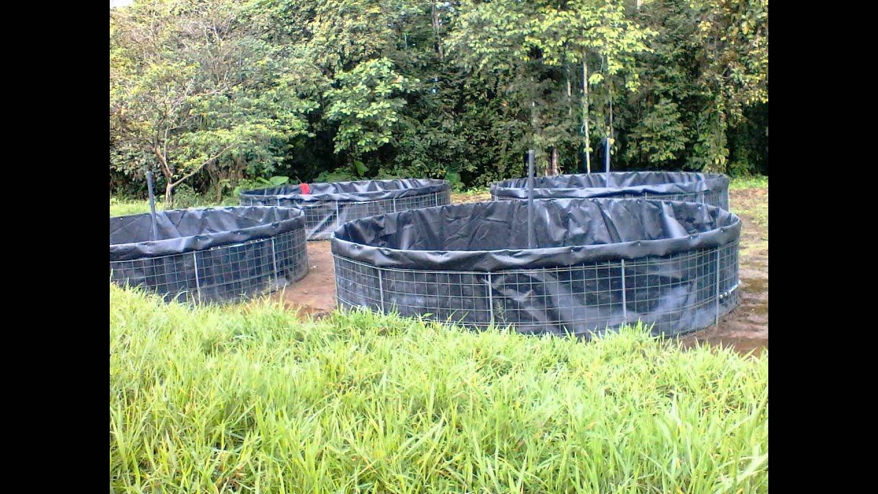 Cultivo de tilapia en tanque de geomembrana youtube for Estanques de geomembrana para tilapia