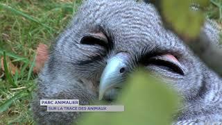 Rambouillet : découverte du parc animalier