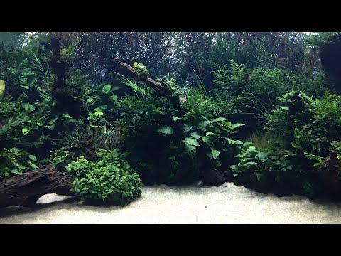 Acuarios plantados - Forest Underwater - By Takashi Amano
