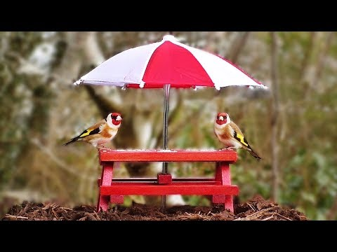 Videos for Cats to Watch : Birds at The Picnic Table - ONE HOUR