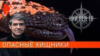 Опасные животные. НИИ РЕН ТВ (21.11.2019).
