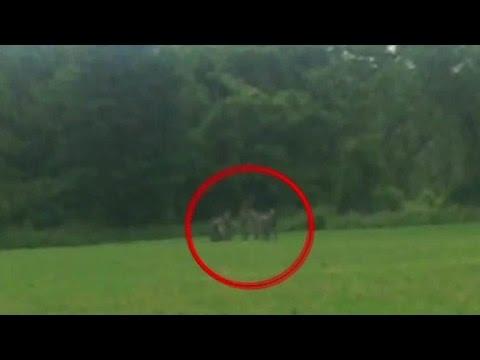 New video shows David Sweat's arrest