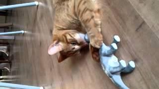 Kat vs dinosaurus