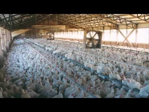 Estes Park Middle School Sustainable Farming vs Corporate Farming