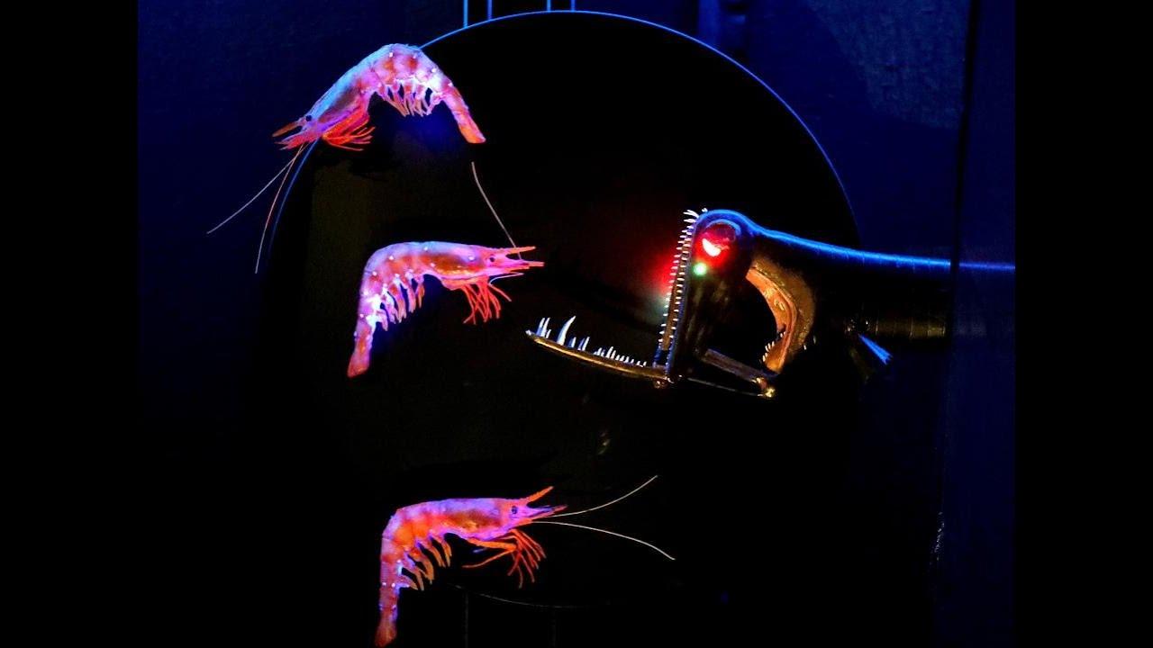 Creatures of Light exhibit opens at Frost Museum