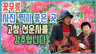 꽃무릇 사진찍기 좋은 곳 고창 선운사를 소개합니다