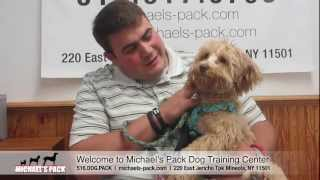 Michael's Pack - Welcome To Long Island's Dog Training Center