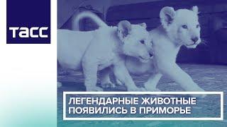 Легендарные животные появились в Приморье