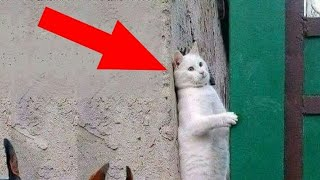 Try not to laugh!!Funny and cute cats complication 2019...