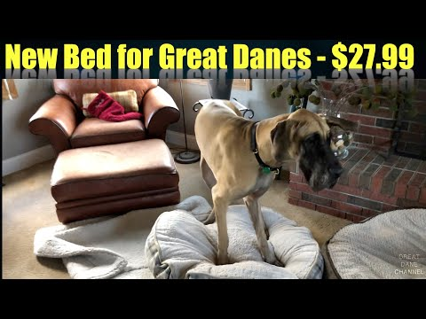 New Bed For The Great Danes From Costco $27.99!!!