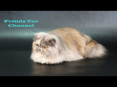 Beautiful Cat Breeds Cats Show