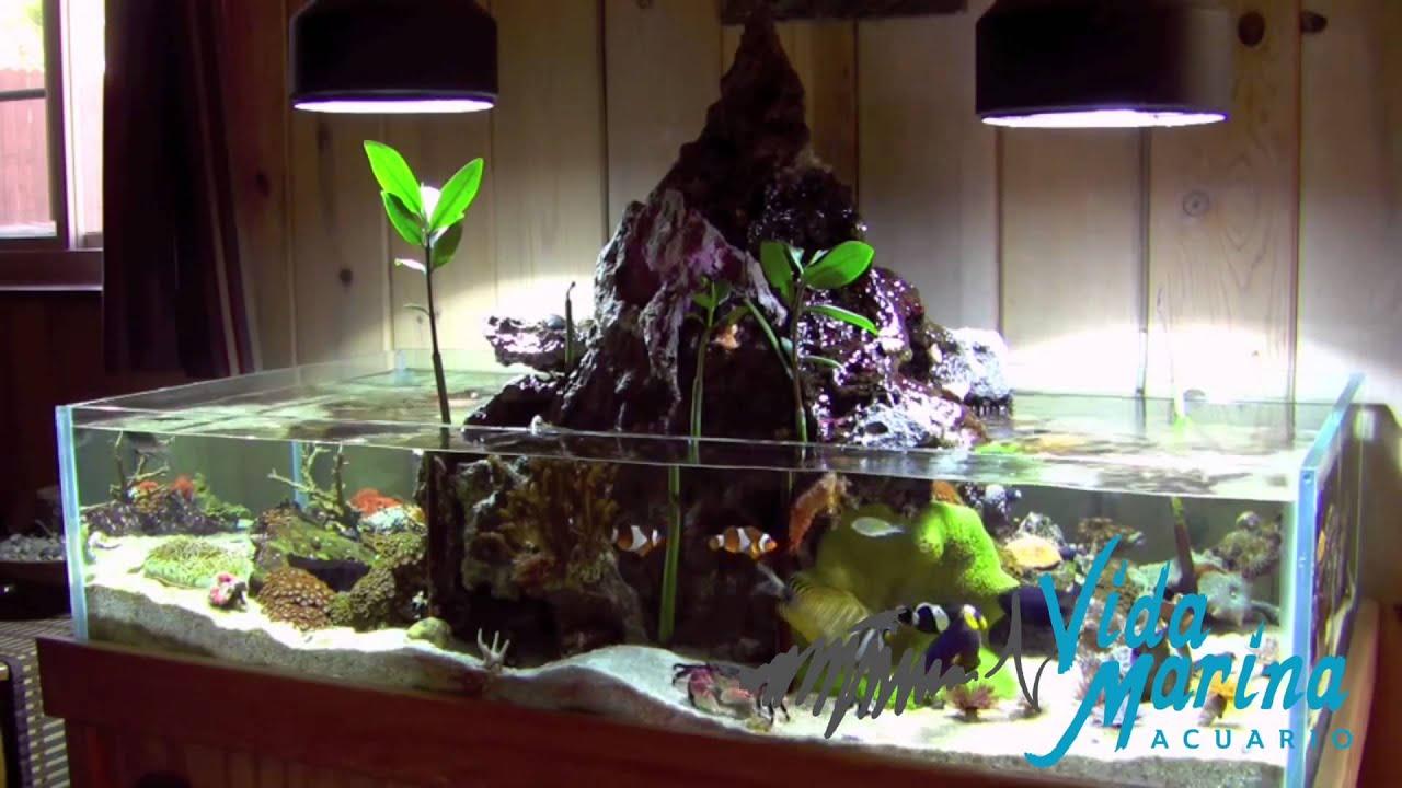 Vida marina puerto vallarta acuario pecera peces for Peces de acuario