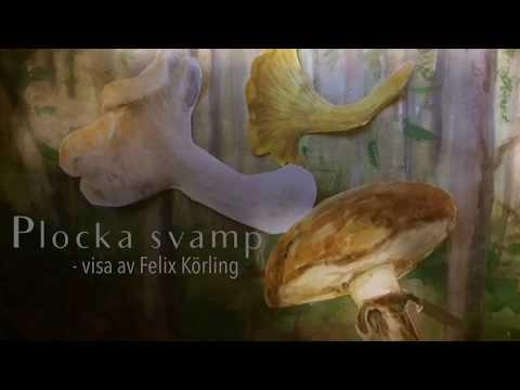 Höstvisa/Svampsång: Plocka Svamp (Lär Dig Olika Svenska Svampar, Med Sångtext!)