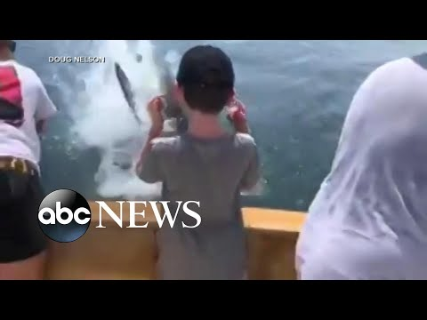 Hilary - Great white shark steals a bite!