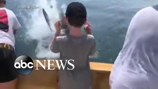 Great white shark snags fish off boy's fishing line