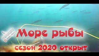 МОРЕ РЫБЫ ХОД КЕФАЛИ 2020 Подводная охота открытие охоты