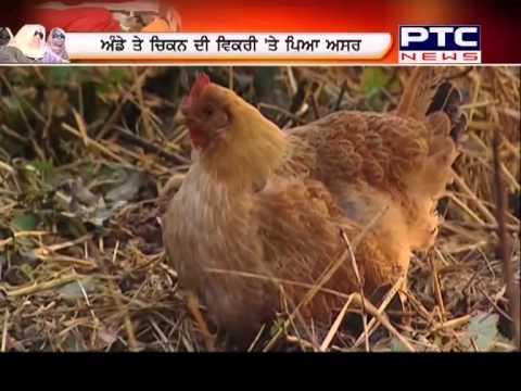 19 Dec 2014   Bird Flu symptoms In Chandigarh Sukhna Lake   Special