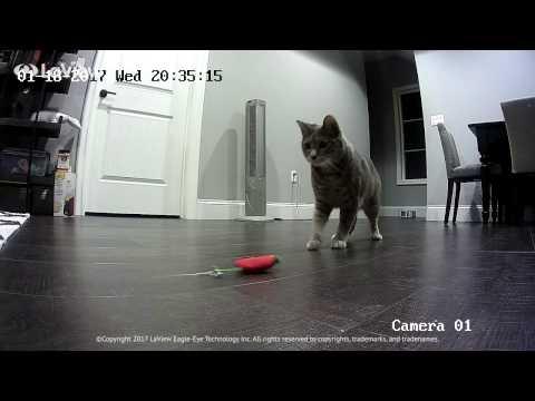 LaView Cam: Acrobatic Cat