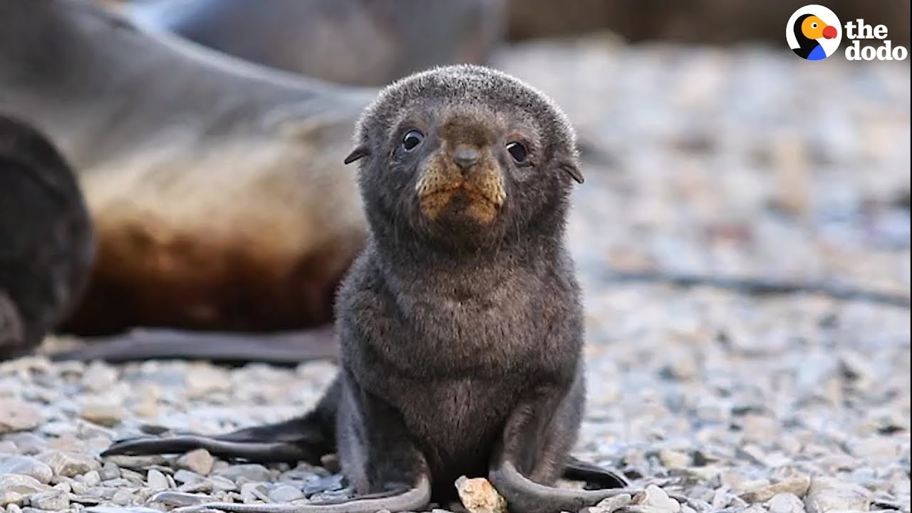 3 Minutes Of The Cutest Animals In The Whole World | The Dodo