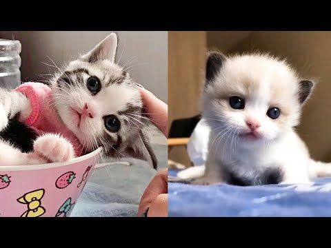Baby Cats - Cute and Funny Cat Videos Compilation - Aww Animals