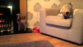 Amazing Jug Dog Tricks