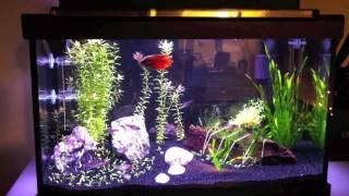 10 G Planted Freshwater Aquarium - Fluval Mini Co2, Ikea Leds