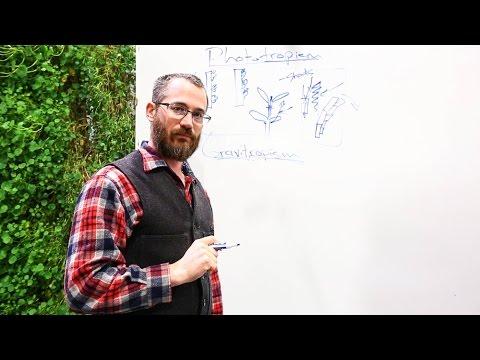Vertical Farming: Phototropism & Gravitropism