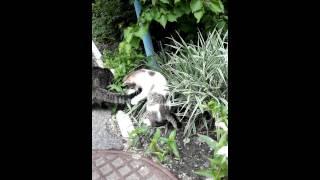 Котята и мама кошка в хорошие руки