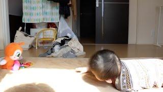初めてハイハイ、赤ちゃんが追い求めていたのは…?