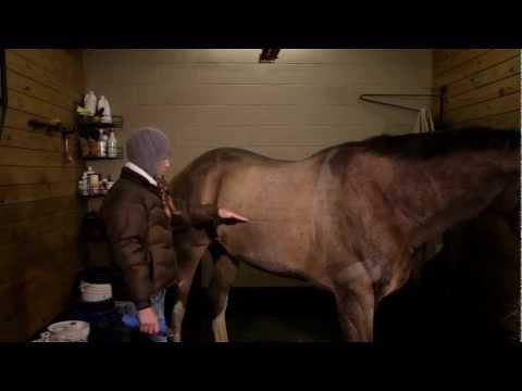 Clipping Special: How to give your horse a winter clip