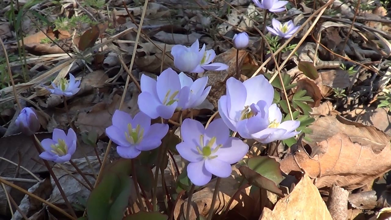 Ранняя весна, пробуждение природы... - YouTube