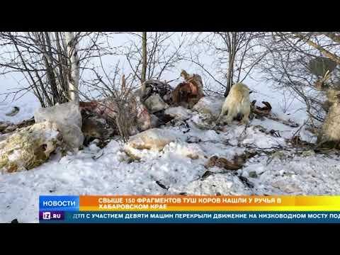 Названа причина появления коровьих туш в ручье в Комсомольске на Амуре