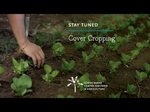 Cover Cropping