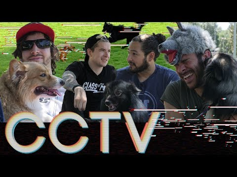 Download Youtube: HERMON PARK DOG PICNIC • CCTV #7