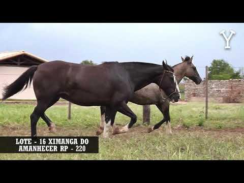 LOTE   16 XIMANGA DO AMANHECER RP   220