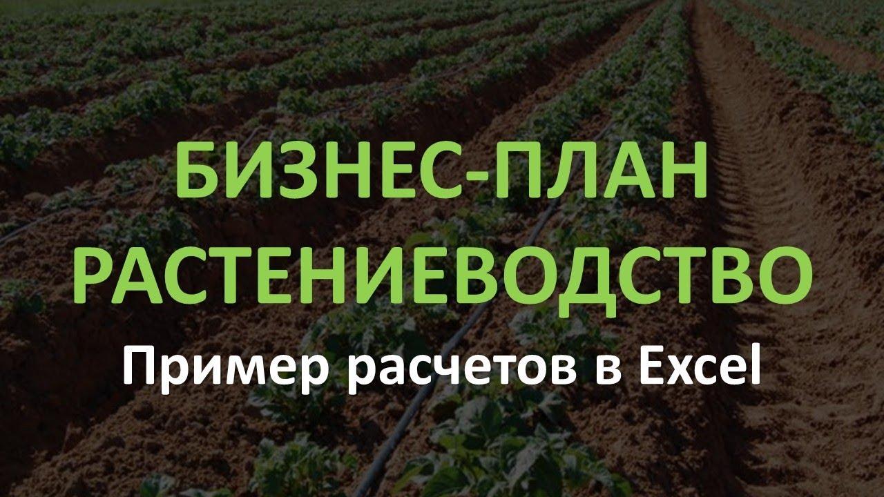Бизнес план образец растениеводства бизнес план одноразовая