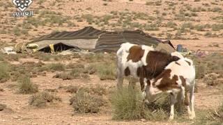 حياة البدو فى الصحراء المغربية-2