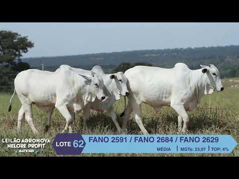 LOTE 62 FANO 2629 X 2591 X 2684