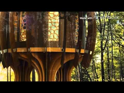 Les plus belles maisons dans les arbres...
