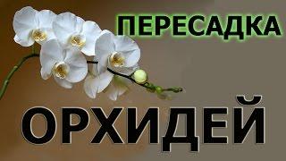 Как пересадить орхидею(Как пересадить орхидею. Поливать после пересадки орхидею не нужно. Лучше подождать несколько дней, пока..., 2014-10-16T20:11:29.000Z)