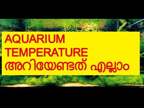How To Maintain Aquarium Water Temperature | Vivek Parayil | Parayil Aqua