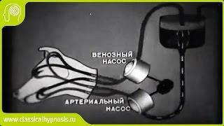 Эксперименты по оживлению организма (физиолог Сергей Брюхоненко).