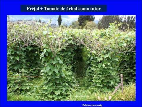La rotaci n de cultivos funnydog tv for Asociacion de cultivos tomate