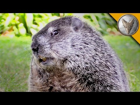 Happy Groundhog Day! - Meet the Future Star of Groundhog's Day 2!