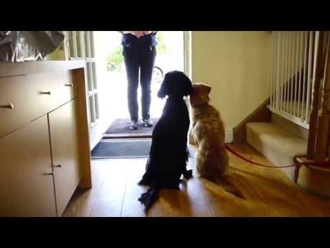 doorbell-desensitisation.-how-to-stop-your-dog-barking-at-the-doorbell.