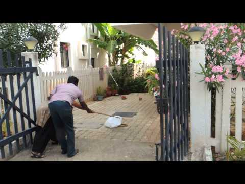 Snake Catching in Vakil Hosur Hills