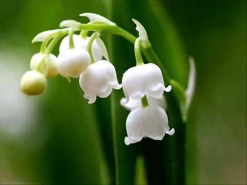Zupfgeigenhansel - Wie schön blüht uns der Maien