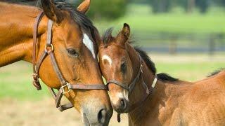 Planet Wissen  Das Geheimnis der Pferdesprache