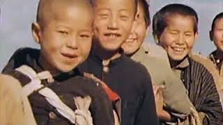 HealthForAll The Evolving Story Japan